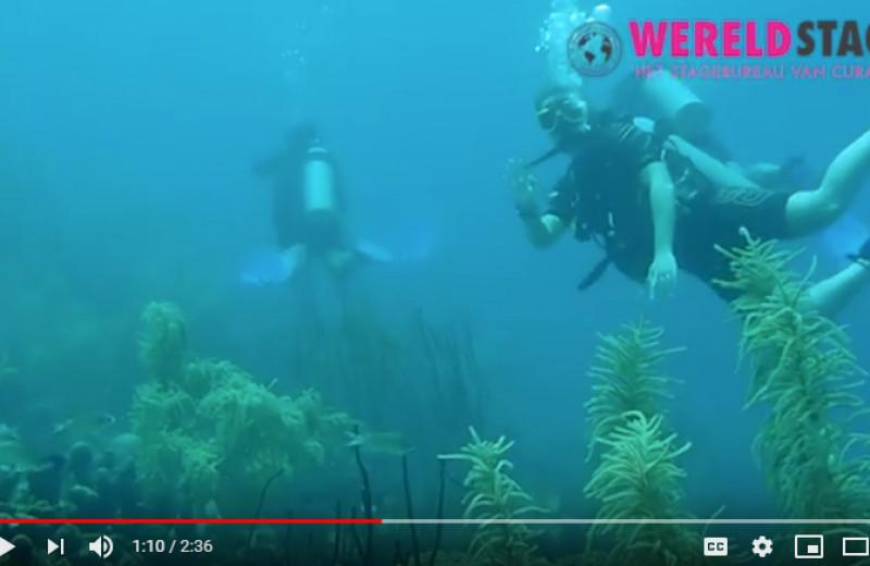Laura gaat duiken